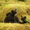 The Amazing things you could be doing at Yellowstone Bear World