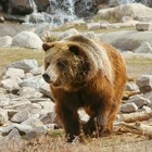 Make Your Summer Vacation Cooler than Your Neighbor's with Yellowstone Bear World Activities