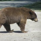 Why You Might Regret Skipping Bear World on Your Next Trip to Yellowstone