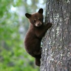 "Finding the ""Bear"" Necessities"
