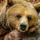 Don't Fear the Bears, Learn About Them!