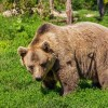 Don't Miss the Curator Tours at Yellowstone Bear World