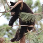 Common Questions About Yellowstone Bear World