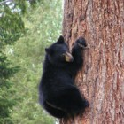 Interesting Facts About Bears You Have Probably Never Heard About