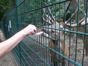 feed-elk