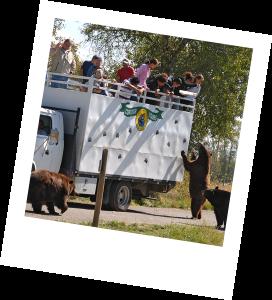 Feeding Adult Bears