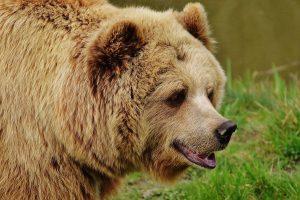 Visit Yellowstone Bear World
