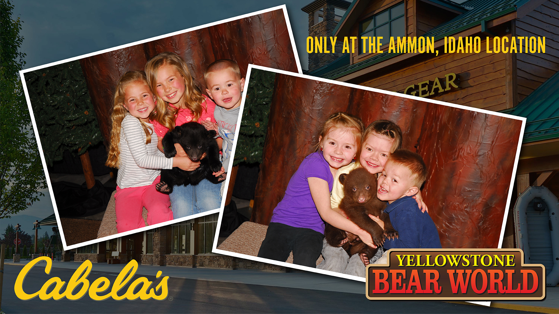 Pictures with Bear Cubs