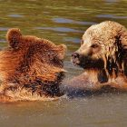Which Is An Ideal Habitat For Grizzly Bears?